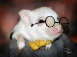 pig h