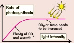 lightIntensity