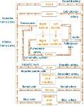 blood-circulation-path
