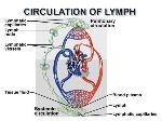 lymphcirc