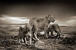 сем лъвове