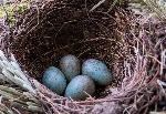 гнезда