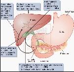 esvaziamento-da-vesicula-biliar