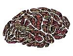 brain-544412_960_720