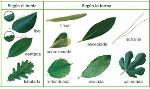wpid-tipos_hojas