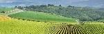 agricoltura-campo-campi-collina-by-daniele-pietrobelli-fotolia-750x253