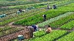 agricultura-campo-cultivos