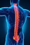 Cuántas-vértebras-tiene-la-columna-vertebral-3