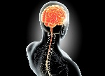 sistema-nervioso-central1