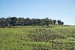 investimento-terreni-agricoli-vicenza11