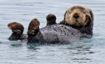 BioSystems-Otter