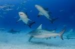 BioSystems-Shark