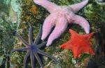BioSystems-SeaStar