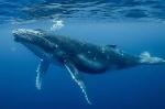 BioSystems-Whale