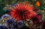 BioSystems-SeaUrchin