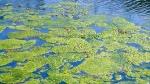 BioSystems-Algae