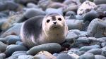 BioSystems-SeaLion