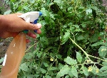 Jardineria-cultivoorganico-repelente