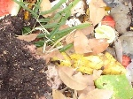 post-compost