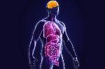 fisiologia-humana