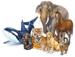 Animali vertebrati