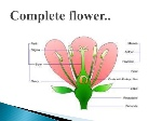 flowers-parts-and-functions-33-638