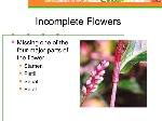 plant-anatomy-physiology-55-638