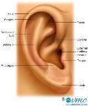 ear_outside_300_myVMC