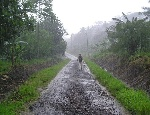 Downpour-Deluge-Samoa-Rainy-Season-Exotic-South-Se-1010