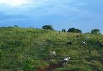 colombia-deforestacion-corredores-biologicos-7-743x512