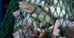 overfish