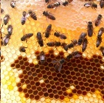bees-and-hive