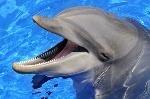 delfino che apre la bocca