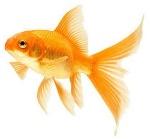pesce3-1