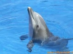delfino0