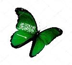 imajen