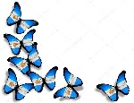 depositphotos_9783818-stock-photo-argentine-flag-butterflies-isolated-on