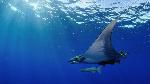 pelagic-zone-animals_82884ea65aa8ab03