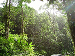 800px-Tropical_forest