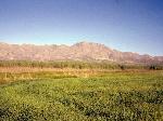 grassland1-c-nova