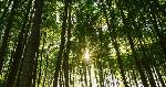 trees_kab_150903_12x5_1600