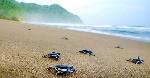 turtles-on-the-beach-1491908283