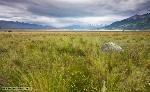 temperate_grasslands_savannas_and_shrublands_1