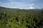 350px-BorneoRainforest_DSC_9267