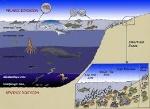 ocean level
