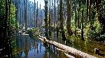 杉林溪秘境與忘憂森林一日遊
