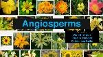 angiosperms-1-638