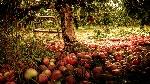 garden-1920x1080-001