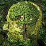 1486865441_cerebro-arbol