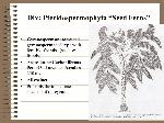 Div_+Pteridospermophyta+Seed+Ferns
